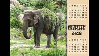 """VISAGE 1.0"" – Calendar 2018 Wildlife"