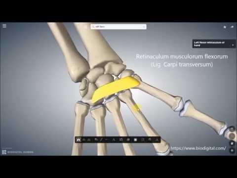 Herniation der Halswirbelsäule Kalanchoen