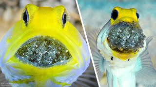Most Incredible Ways Animals Give Birth