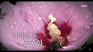 나라의 꽃, 무궁화