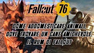 FALLOUT 76 - COME ADDOMESTICARE ANIMALI, DOVE TROVARE UN CANE AMICHEVOLE, IL RUM DI FALLOUT