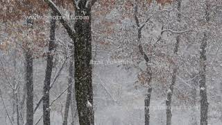 降雪の動画素材, 4K写真素材