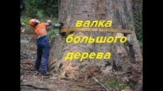 ЖЕСТЬ!!! ВАЛКА БОЛЬШОГО ДЕРЕВА - ТОПОЛЬ/The Big Tree Shaft - Poplar
