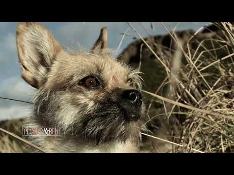 The Incredible Search and Rescue of Gobi the Dog - Pickler