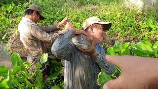 Thử thách mò cá trê nhưng dính lóc khủng, 1 bầy cá chim rồi ăn gà và cò nướng | Săn bắt SÓC TRĂNG |
