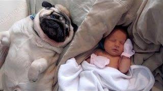Kediler Ve Köpekler Bebekler Tepki - Sevimli Hayvan