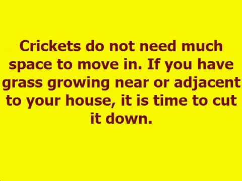 How To GET RID Of [CRICKETS] In Your HOUSE