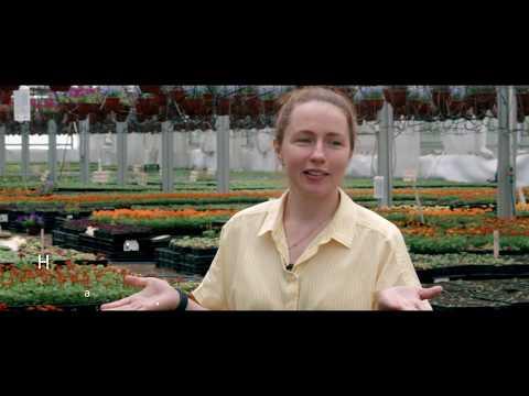 Рассада цветов и овощей, тепличный комплекс п. Пушное