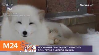 Москвичей пригласили отметить День песца - Москва 24