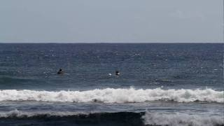 preview picture of video 'HUMPBACK WHALE CRUISIN' by surf break - Pohoiki Hawaii'