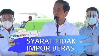 Tinjau Hasil Panen di Indramayu, Presiden Joko Widodo Ungkap Syarat Pemerintah Tidak Impor Beras