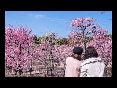 なばなの里 春の梅・桜まつりイメージ