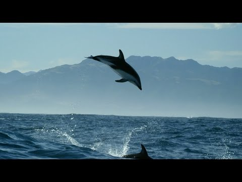 Dolphin Ecards Dolphin wildlife videos BBC Dolphin Documentary..