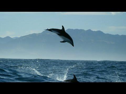 Kaarten met dolfijnen, Dolphin wildlife videos BBC Dolphin Documentary..