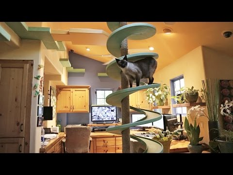 Man Turns His House Into Indoor Cat Playland And Our Hearts Explode