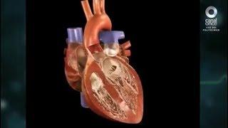 Diálogos en confianza (Salud) - Arritmias cardiacas