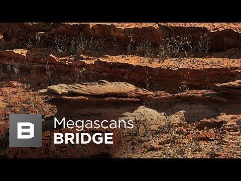 Answered: Megascans Bridge Unity Live Link bug - not completely