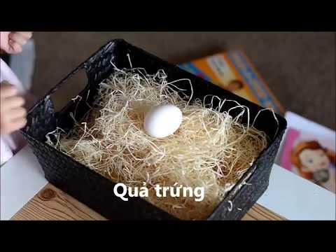 Thí nghiệm đơn giản với quả trứng