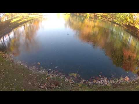 Pond Bass Fishing with Live Bluegill