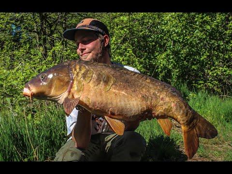 Spejlkarpe på 12,1 kilo