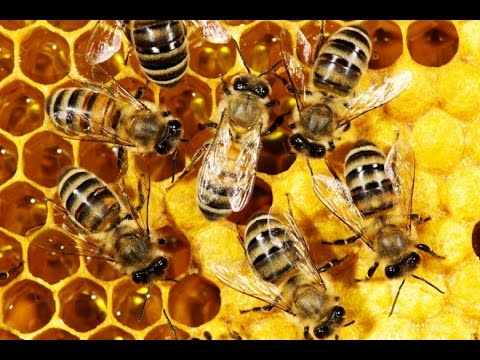 Meaning of dreaming with bees
