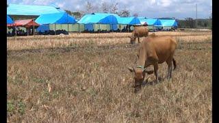 Siswa SMPN 22 Bulukumba Harus Belajar di Tenda Beralaskan Spanduk Bekas karena Sekolah Disegel Warga