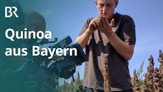 Superfood aus der Heimat: Quinoa-Anbau in Bayern | Unser Land | BR Fernsehen