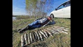 Щука и все о ней рыбалка в кемеровской области