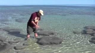Geology - Stromatolites