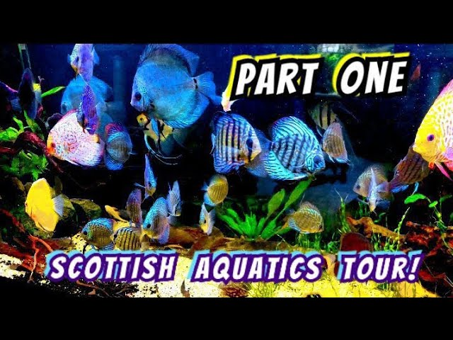 Monster Fish, Discus, Plecos, Rares, Shrimp - Tanks From Huge to Nano - A Tour Of Scottish Aquatics