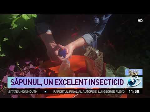 Pastile de enterobioză pentru viermi