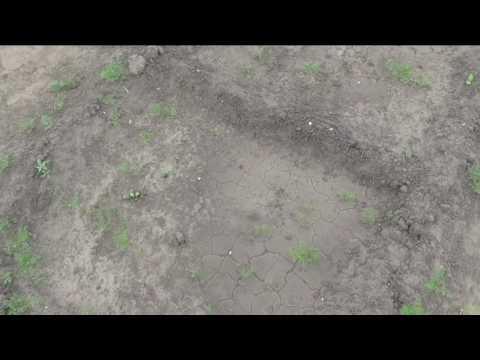 Кабачки начали всходить через неделю после посева в открытый грунт