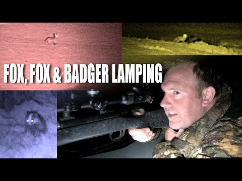 Fox, Fox and Badger Lamping