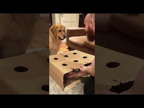כלב חמוד מאבד את הסבלנות בזמן משחק עם הבעלים שלו