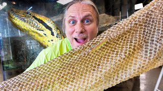 ALL MY GIANT SNAKES SHED!!! | BRIAN BARCZYK