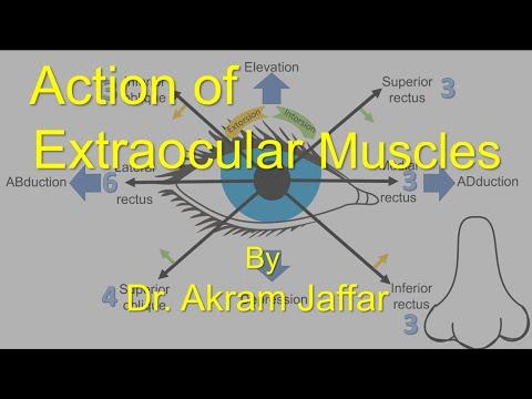 Ruchy mięśni zewnątrzgałkowych
