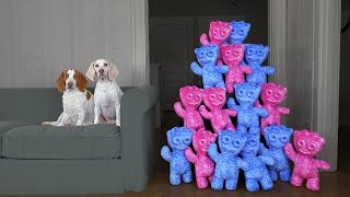 Dogs vs Giant Sour Patch Kids Army Prank! Funny Dogs Surprised by Giant Gummy Candy