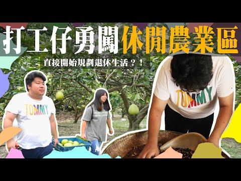 阿航去打工 - 茶道大師教你採柚烘茶!!