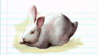 Rabbit - Super Baby Animals