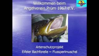 preview picture of video 'Angelverein Prüm - Projekt Eifeler Bachforelle ~ Flussperlmuschel'