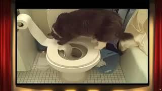 коты  с бумагой