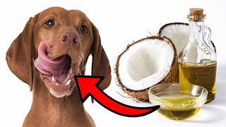 8 Reasons To Use Coconut Oil For Dogs