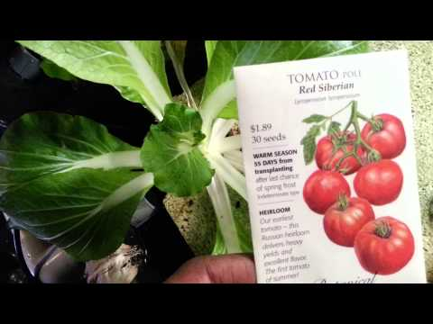 , title : 'Red Siberian Tomato's for Cold Climate Growers