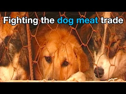 How Animals Asia works to end the dog meat trade