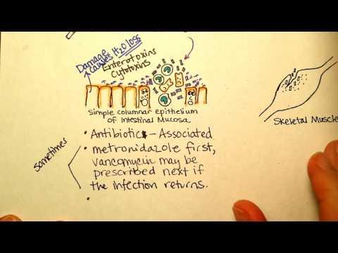 A bélrendszerben élő paraziták
