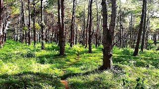 Drönare - Träden i vinden