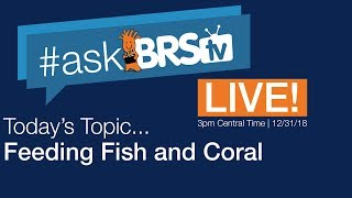 How do you feed your fish and corals? - #AskBRStv Live