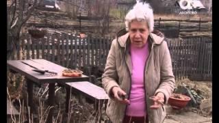 Как правильно подрезать смородину. Голова садовая
