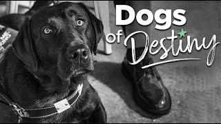 """'Dogs of Destiny' S1:E3 """"Freedom Walk"""""""