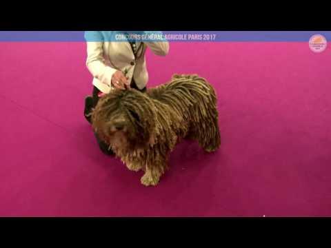 Voir la vidéo : Ring Canins du 03 mars 2017, partie 3